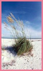 Marco Island Florida Hotels Resorts Vacation Rentals